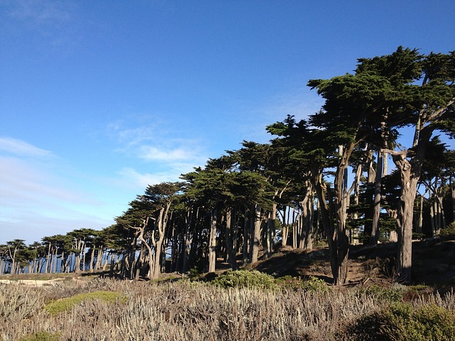 Menlo Park, San Mateo County CA