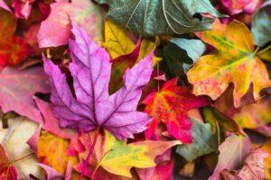 fall/autumn leaves