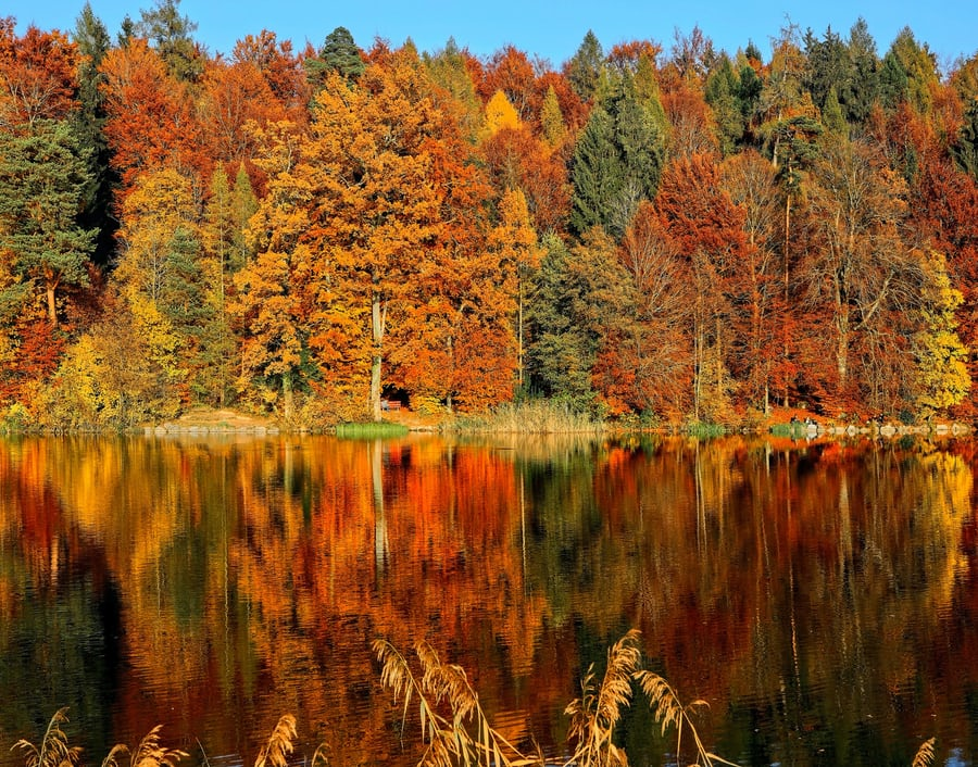 Swimming in the Autumn Months